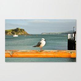 Seagull on Waiheke Canvas Print