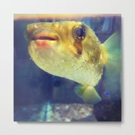 Blowfish fo days Metal Print