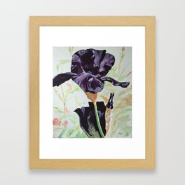 Black Iris Framed Art Print