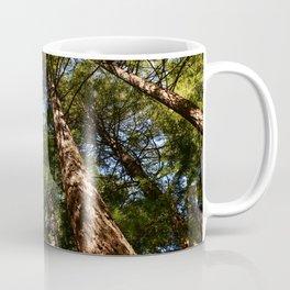 Sequioas Reaching  For The Sky Coffee Mug