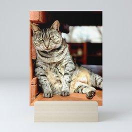 Lazy Cat (Lanai Cat Sanctuary) Mini Art Print