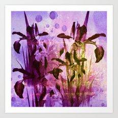 Iris and light Art Print