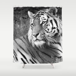 Wildlife Collection: Tiger Shower Curtain