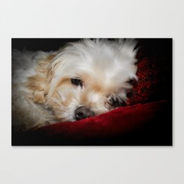 Was the flash necessary? Canvas Print