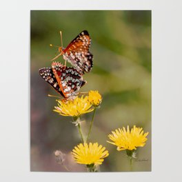 Butterfly Acrobats Poster