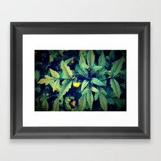 Flower Bud among leaves  Framed Art Print