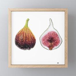 Fig Botanical Art Framed Mini Art Print