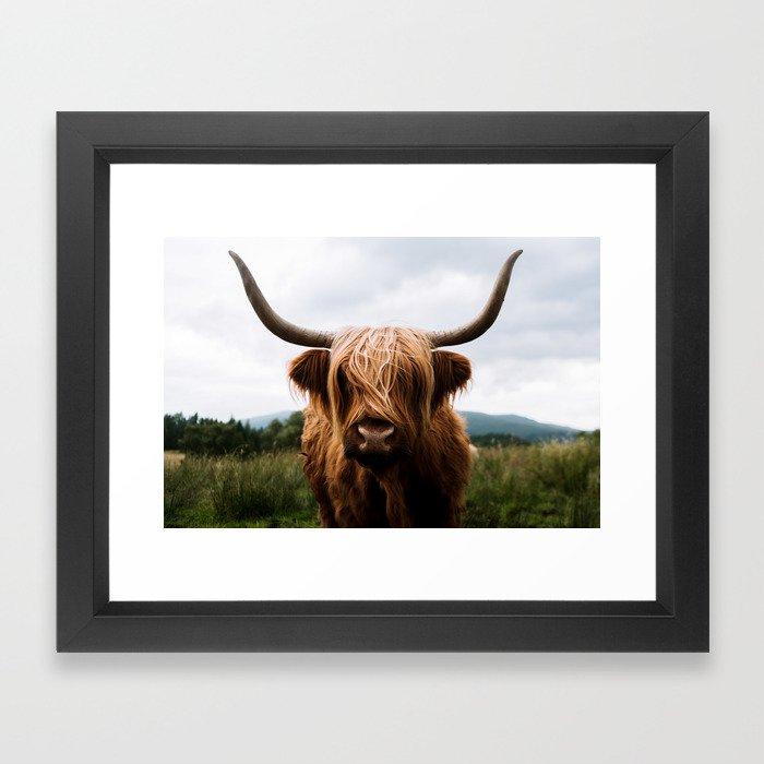 Scottish Highland Cattle in Scotland Portrait II Framed Art Print