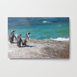 Funny African Penguins Metal Print