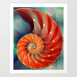 Nautilus Shell - Nature's Perfection by Sharon Cummings Art Print