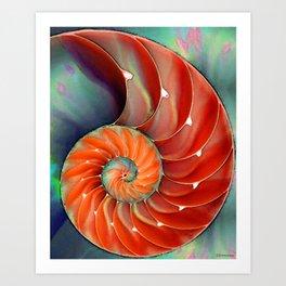 Nautilus Shell - Nature's Perfection by Sharon Cummings Kunstdrucke