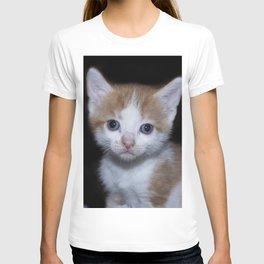 Adorable Baby orange and white tabby kitten T-shirt