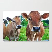 cows Canvas Prints featuring Cows by Chris Klemens