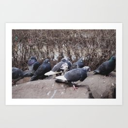 An Avian Meeting Art Print