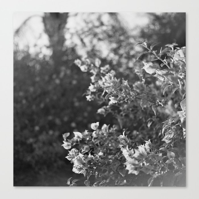 Flowers in Film Canvas Print
