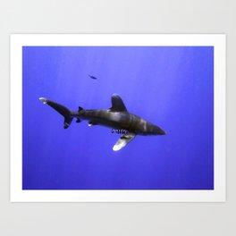 Oceanic Whitetip with Pilot Fish Art Print