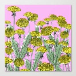Taraxacum field Canvas Print