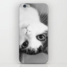 Upside down cat iPhone Skin