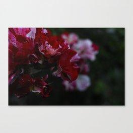 Garden Flower - Los Angeles Canvas Print