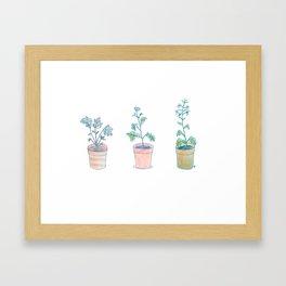 Radish. Framed Art Print