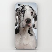 great dane iPhone & iPod Skins featuring Great dane by Life on White Creative