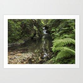 Quinault Rainforest & Falls 5-24-20  Art Print