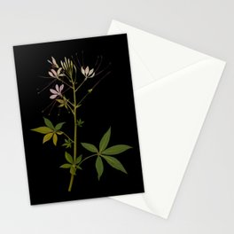 Cleome Pentaphylla (Tetradinamia Siliquosa) by Mary Delany Paper Collage Floral Flower Botanical Paper Mosaic Vintage Scientific Plant Anatomy Stationery Cards