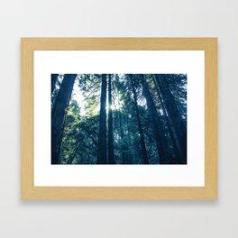 Among the trees Framed Art Print