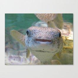 Smiling Fish Canvas Print