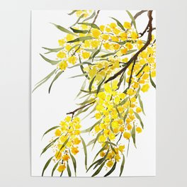 Godlen wattle flower watercolor Poster