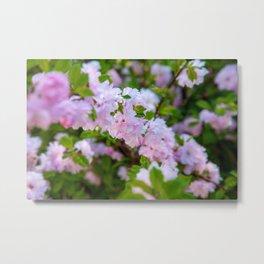 Double Flowering Plum Metal Print