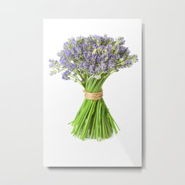 Closeup of lavender flowers over white background Metal Print