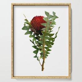 Banksia - Australian Native Flower Serving Tray