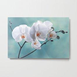 Orchid white macro 084 Metal Print