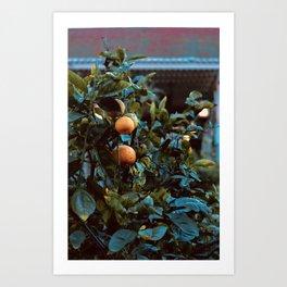 Oranges in the Courtyard Art Print