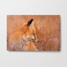 Found Fox Metal Print
