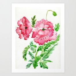 Ruffled Bloomers Art Print