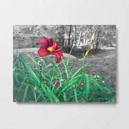 Fire Lily Metal Print