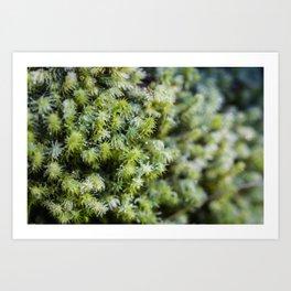 Winter Moss Art Print