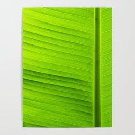 banana tree leaf Poster