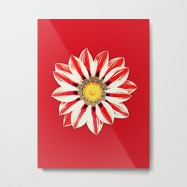 African Daisy / Gazania - Red and White Striped Metal Print