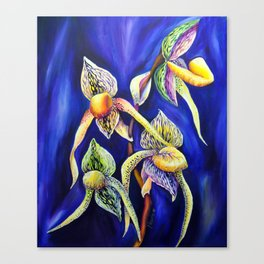 Orchid -  The Paphiopedilum , known as Lady's Slipper Canvas Print