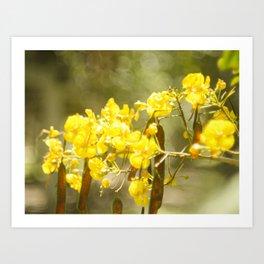 Popcorn Flower Bokeh Delight Variation Art Print