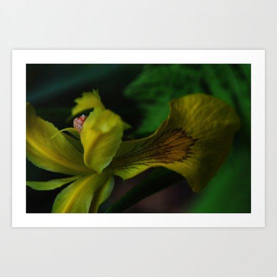 Garden Treasure Art Print