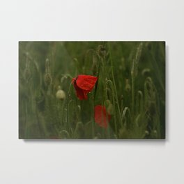 Red Poppies at Dusk Metal Print