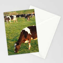 Holstein cattle Stationery Cards
