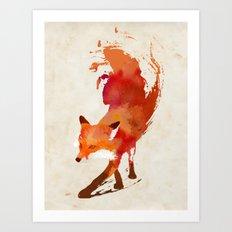 Vulpes vulpes Art Print