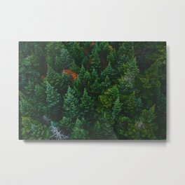 The Lively Forest (Color) Metal Print