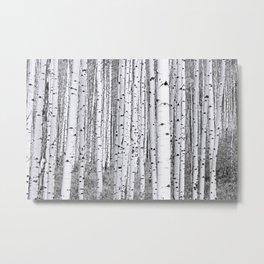 Aspen Grove / Black & White Metal Print