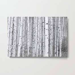Aspen Grove / Black & White Metal Print